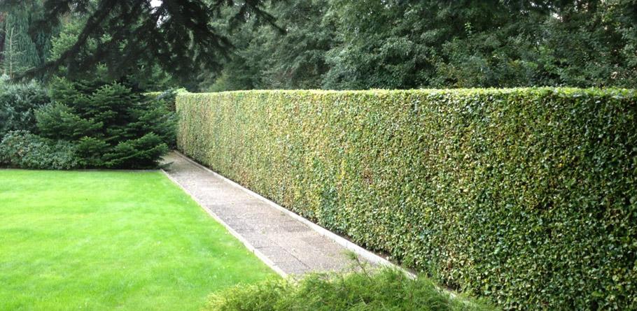Garten Und Landschaftsbau Dennis Mahlstedt